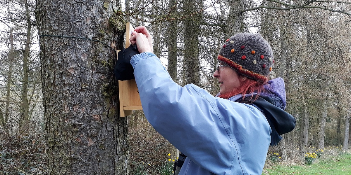 Want to Protect Red Squirrels?